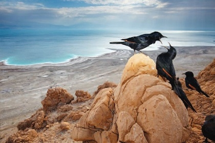 Starlings overlooking the Dead Sea. Israeli Competition: Photograph of the Year. By Ilia Shalamaev